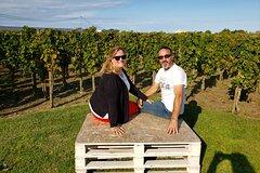Wild Abruzzo Lands TruffleHunting WineTasting CookingClass Experience from