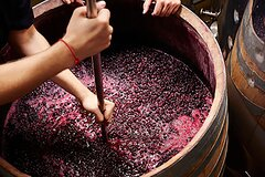 Wine Making Private Experience In Tuscany
