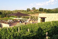Small-Group Exclusive Winery and Wine Tasting Tour in Frascati