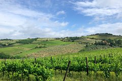 Walking Tour of Chianti Classico with Wine Tasting