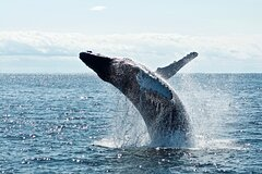 PRIVATE Whale Watching Tour - up to 11 people in your group