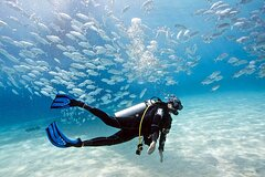 Exciting Gold Coast Diving Excursions