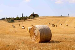 Guided Wineries and Cheese Day Tour at Tuscany with Lunch