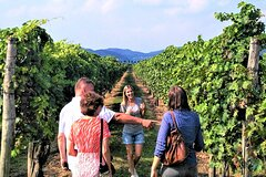 From Venice: Wine Tour in the Euganean Hills