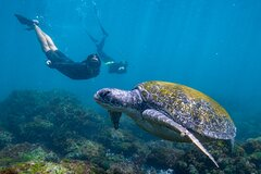 Snorkel with Turtles in Cook Island Aquatic Reserve