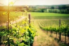Private Half-Day Castelli Romani Wine Tour from Rome
