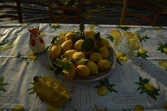 Discovery Tour of Sorrento Lemon in Massa Lubrense