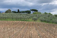 Private Food and Wine Experience in Rome with Transport