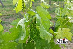 Private Irpinia Wine Tour from Sorrento with sommelier