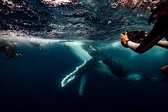 Swim with whales Gold Coast
