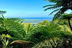 Full Day Tour in the Daintree