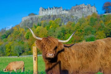 Stirling Castle,Trossachs National and Loch Lomond Day Tour from Edinburgh
