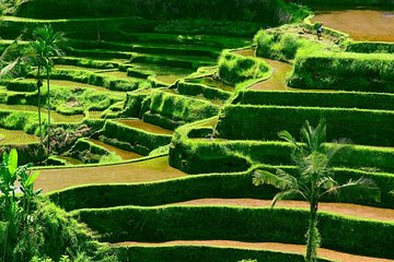 Private Shore Excursion: Customized Best of Bali Tour