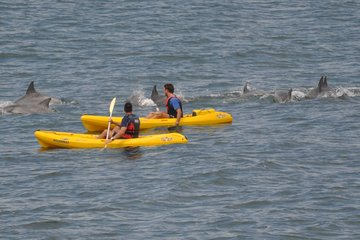Sea Kayak and Cape Point Private Tour from Cape Town