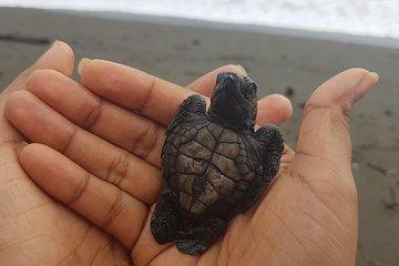 Che è tartaruga dating nella vita reale