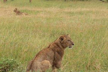 3 Days PRIVATE LUXURY SAFARI to Masai Mara from Nairobi
