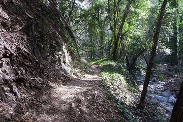 Private Half-Day Mountain Bike Tour Near Los Angeles