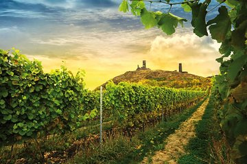 Prague Wine Tasting and Countryside Small-Group Tour with Lunch