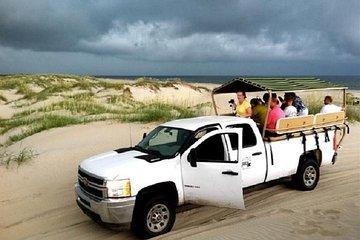 Wild Horse Tour From Virginia Beach 2020