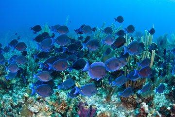 Glass Bottom Boat Cruise at Buccoo Reef