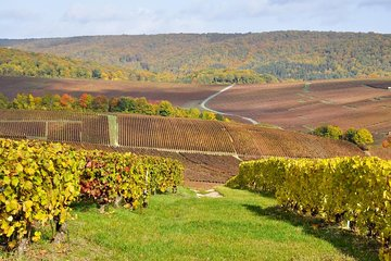 Champagne Day Trip with Moet & Chandon, Hautvillers & Family Winery from Paris