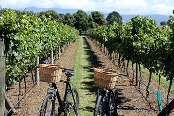 Nice Local Vineyards Small Group Half Day E-Bike Tour with Wine Tasting
