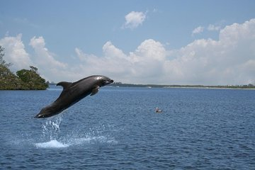 Small-Group Dolphin-Watching Cruise from Goa