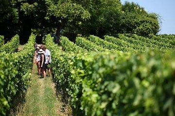 Bordeaux Super Saver: Médoc Wine Tour and Lunch plus St-Emilion
