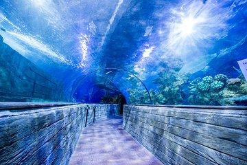 Malta National Aquarium Entrance Ticket