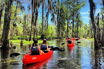 Swamp Tour New Orleans >> Kayak Swamp Tours New Orleans 2019 All You Need To Know Before