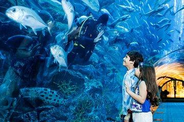 Skip the Line: Dubai Aquarium and Underwater Zoo Tickets