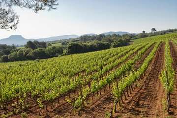 Private Day Trip: Wine Tasting Tour Including Pinic Lunch From Cannes