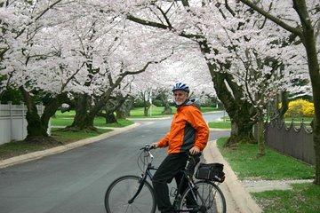 Exclusive: Cherry Blossom Bike Tour in Washington DC