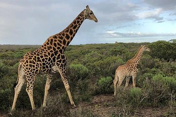 Wildlife Safari, Olive, Beer and Wine Tasting Day Tour from Cape Town