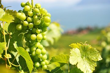 A Passion For Wine - Private Wine Tour to Azeitao Tickets