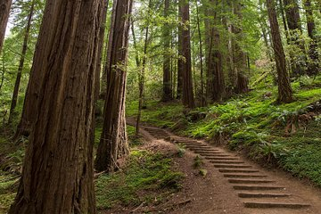 Muir Woods National Monument Mill Valley 2019 All You