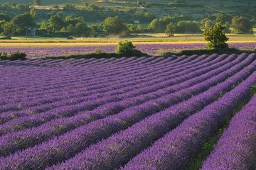 Private Tour: Provence Lavender Fields and Aix-en-Provence Day Trip from Marseille