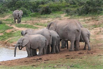 Wildlife Safari Tours from Cape Town - 2019 Travel Recommendations