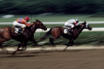 Singapore Turf Club: Horse Racing