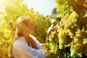 Frascati and Castelli Romani Private Wine Tour from Rome