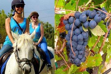 Horseback Riding Tour in a Natural Park from Barcelona & Wine tasting in Penedés