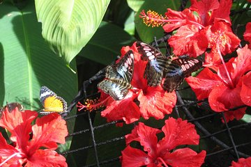 Half-Day Tour to Tropical Spice Garden and Entopia by Penang Butterfly Farm