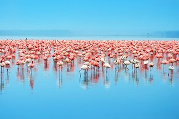 Day Trip to Celestun: Flamingos, Mangrove Boat Ride and Beach Break