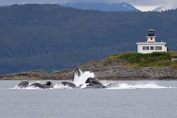 Premier Whale Watch and Mendenhall Glacier Combo