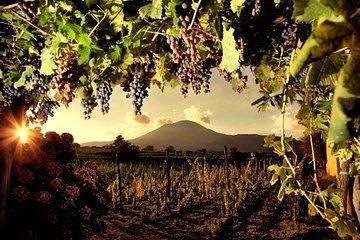 Divino Vesuvio - Wine Tasting on the slopes of Mount Vesuvius from Naples