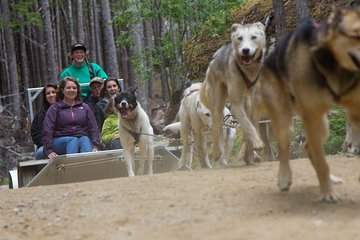 Sled Dog Discovery in Juneau