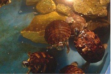 Skip the Line: General Admission Ticket to World Aquarium ...