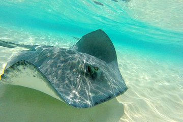 Stingray City and Snorkel Tour