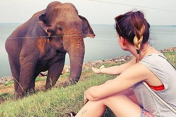 Day Excursions To Udawalawe National Park From Negombo