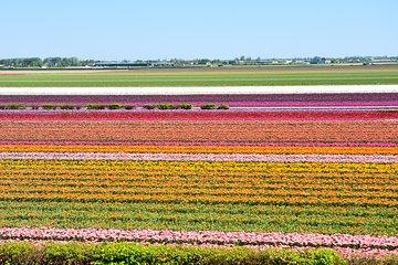 Keukenhof, Flower Fields, Volendam and Zaanse Schans Small Group Tour
